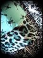 Black/mint green skull dress leopard details - size M/L